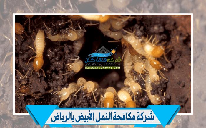 مكافحة النمل الأبيض